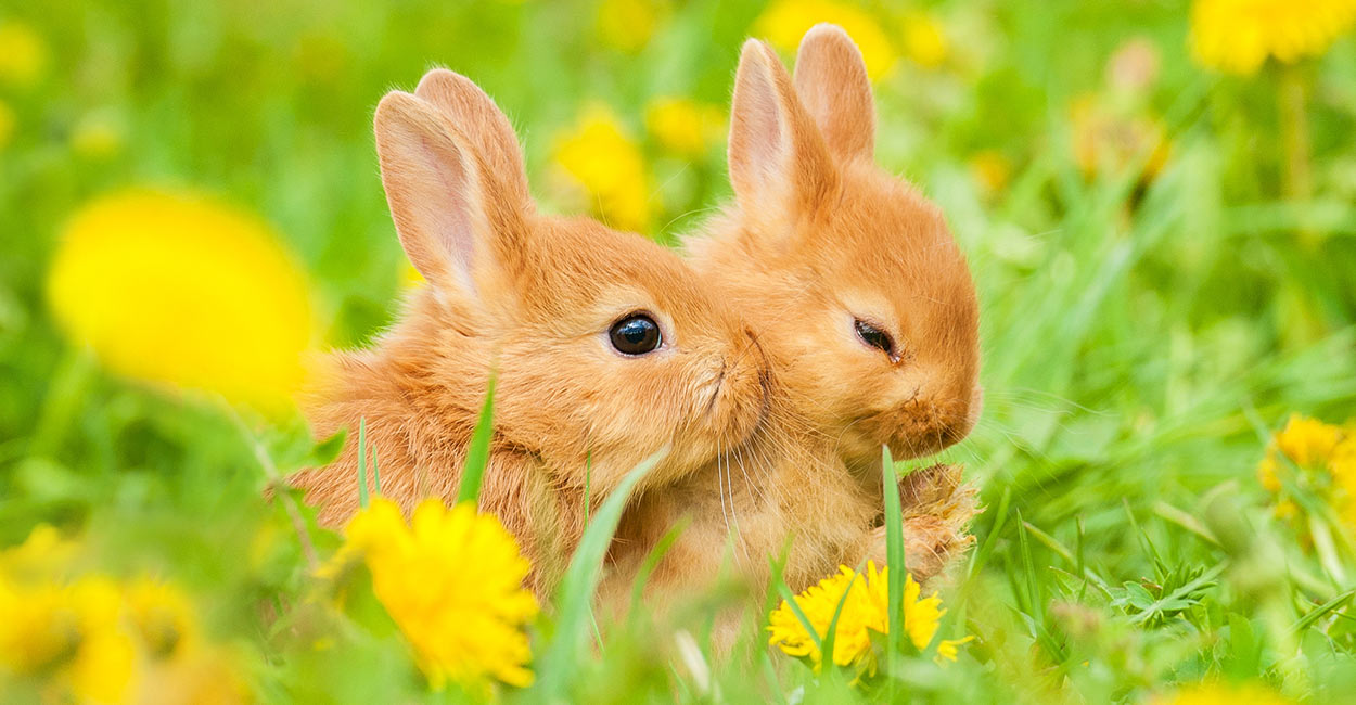 what-do-baby-rabbits-eat-header